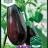 Solanum melongena 'Moneymaker No.2 F1'-thumbnail