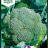 Brassica oleracea 'Premium Crop F1'-thumbnail