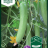 Cucumis sativus 'Delistar F1'-thumbnail