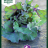 Brassica oleracea 'Autumn Star F1'-thumbnail