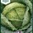 Brassica oleracea 'Aubervilliers'-thumbnail