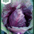 Brassica oleracea 'Kalibos'-thumbnail