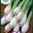 Pillisipuli 'White Lisbon'-thumbnail
