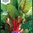 Beta vulgaris 'Rhubarb Chard'-thumbnail