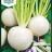 Turnip 'Snow Ball'-thumbnail