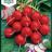 Radish 'Cherry Belle'-thumbnail