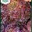 Lettuce 'Merville des quatre saisons'-thumbnail