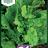 Lettuce 'Australicher Gele'-thumbnail