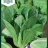 Lettuce 'Chartwell'-thumbnail