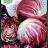Radicchio 'Palla Rossa 5'-thumbnail