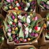 Keväinen valikoimamme täydentyy-thumbnail